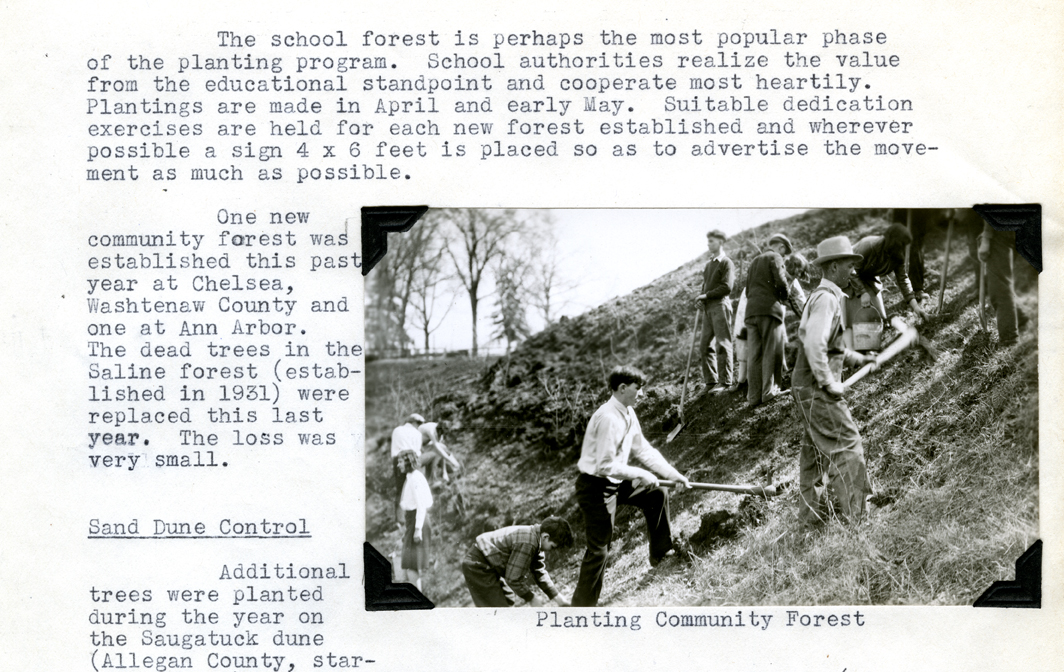 Planting a Community Forest