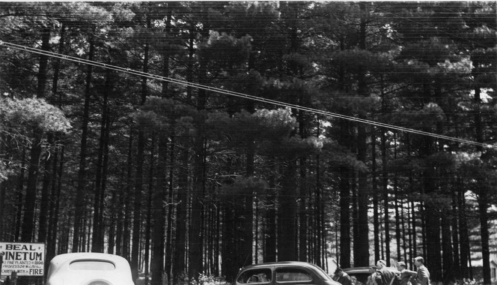 Beal Pinetum, circa 1930