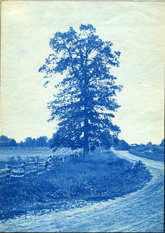 40. A tree next to fields and a road, circa 1888.
