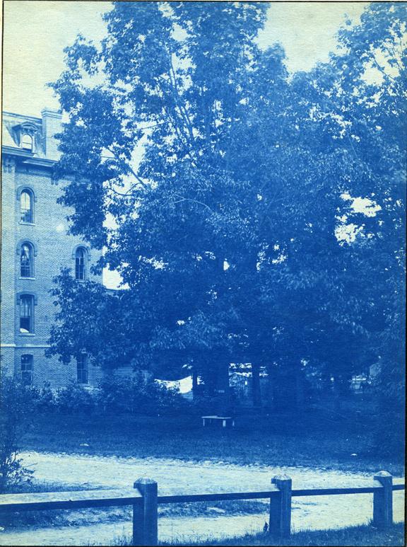 50. Williams Hall and trees, circa 1888.