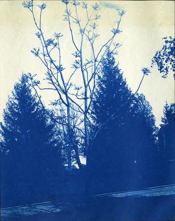 67. Trees next to a path, circa 1888.