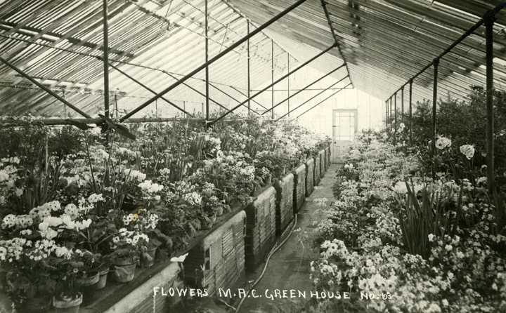 Flowers inside the Greenhouse