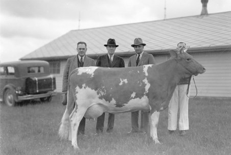 Four men standing with a dairy cow, 1935