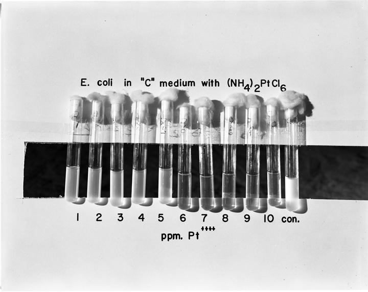 Testing E. coli, 1965