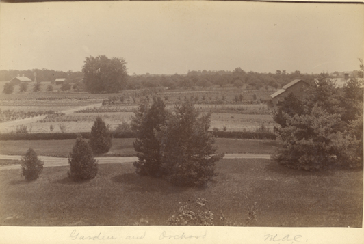 M.A.C. gardens and orchard, date unknown