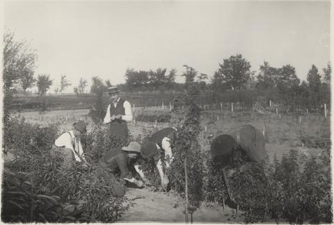 Horticulture class, 1893