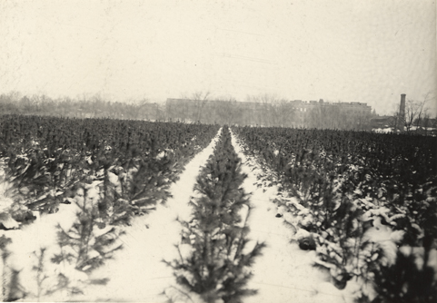 Campus view from the Forestry Plats, date unknown