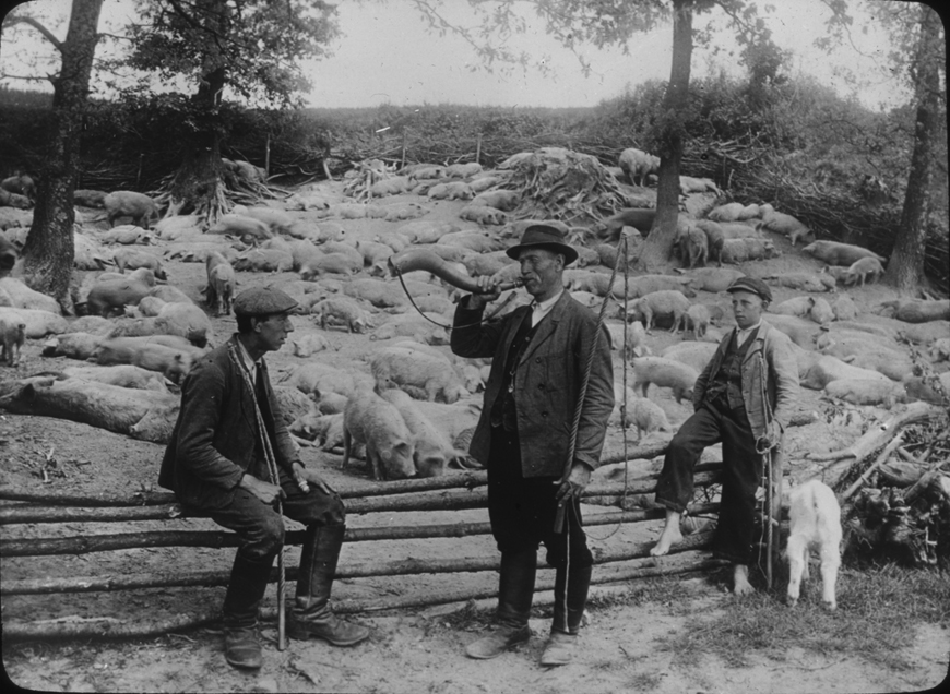 Austrian pig farm with three men, undated