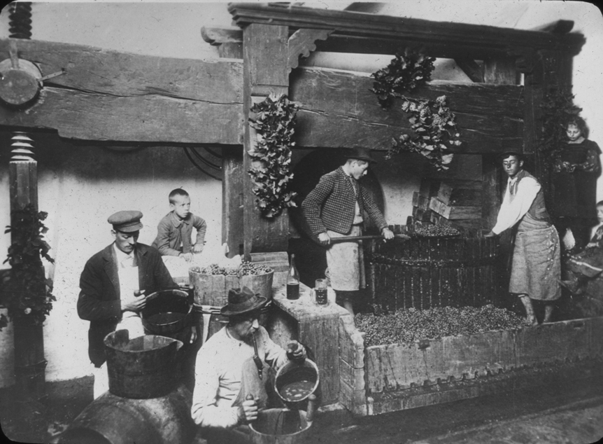 Austrian pigeage and wine making scene, undated