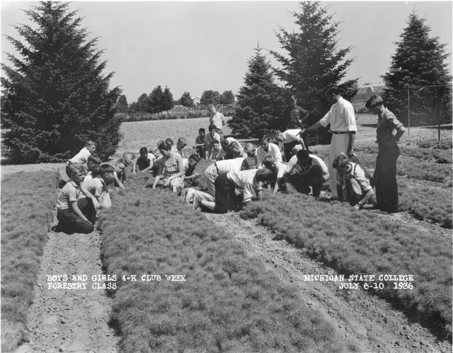 Children in 4-H work on seedlings, 1936