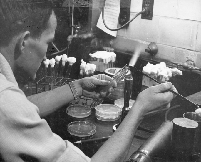 A student does bacteriology research, date unknown