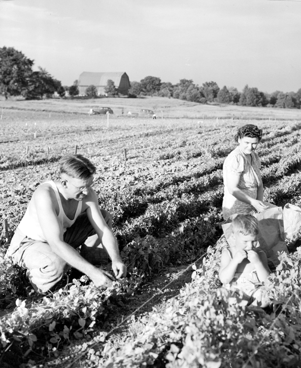 Family victory garden, date unknown