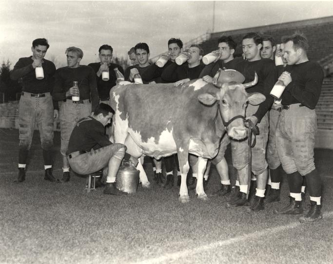 Football team drinking milk, 1937