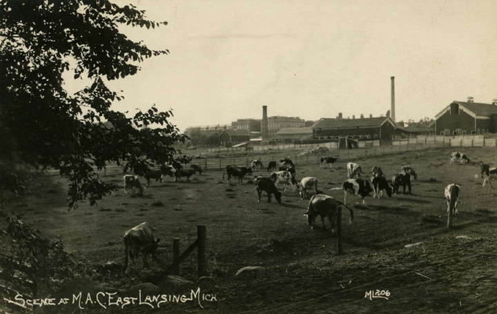 A cow pasture, date unknown
