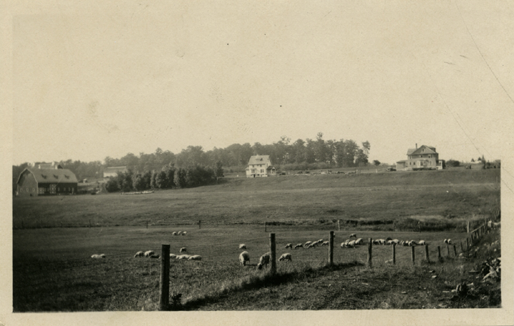 A sheep pasture, date unknown