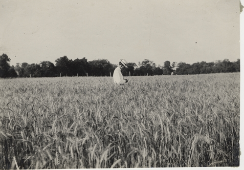 A man stands in a field of crops, date unknown