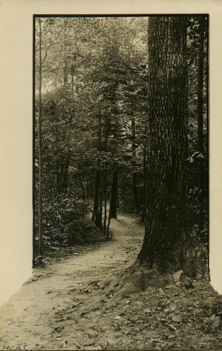 Forest Path, date unknown