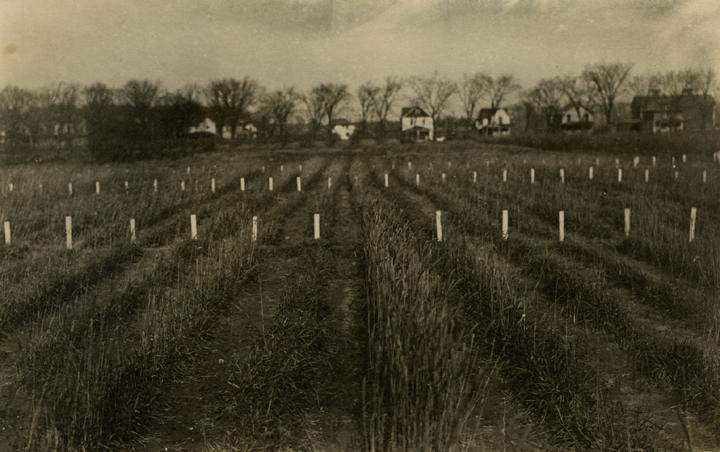 Farm Field, date unknown