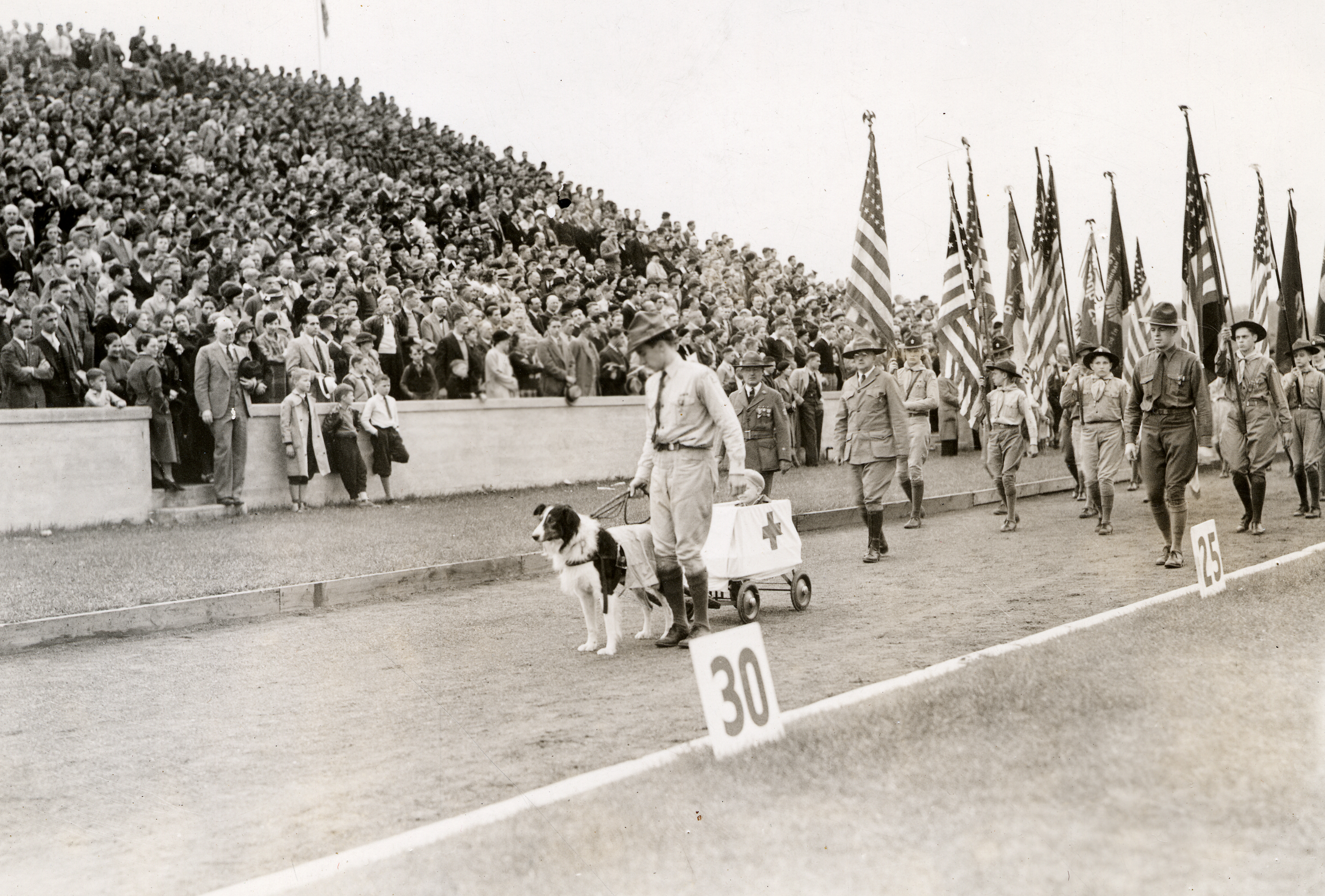 A dog marches with Boy Scouts during half-time, circa 1920s