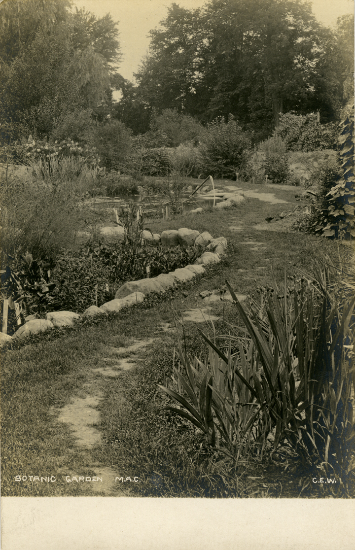 A path in the Beal Botanical Garden, date unknown