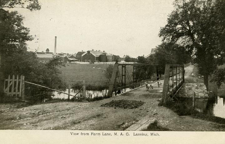Animals on Farm Lane, 1909