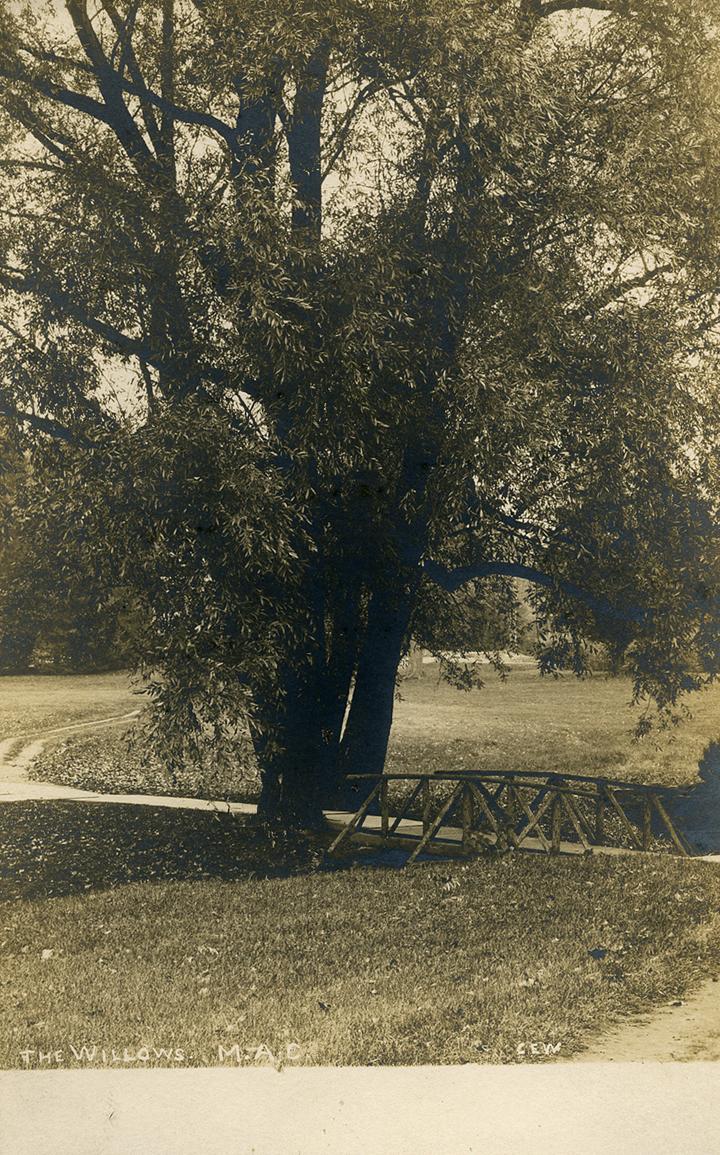 Bridge under a willow tree, date unknown