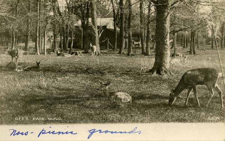 Deer Park, date unknown