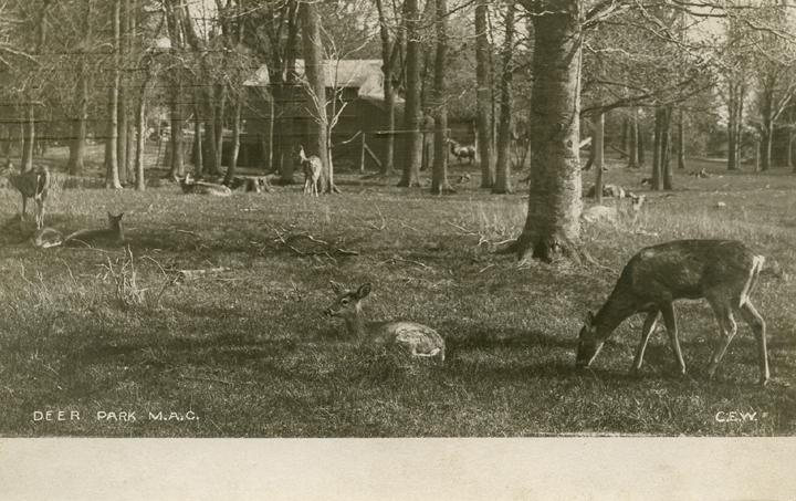 Deer Park, 1907