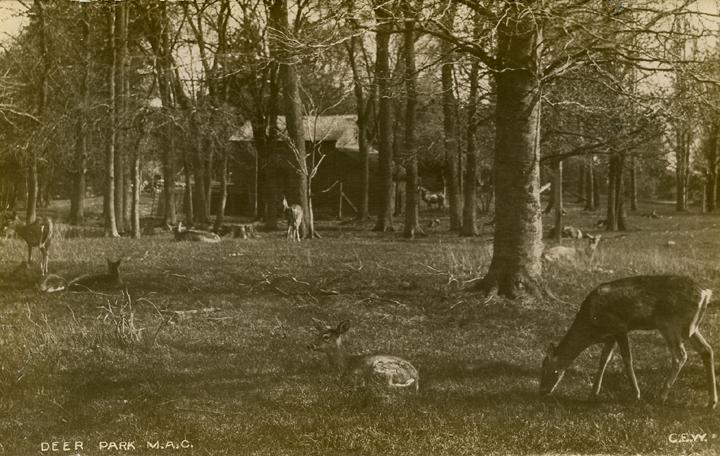 Deer Park, ca. 1907