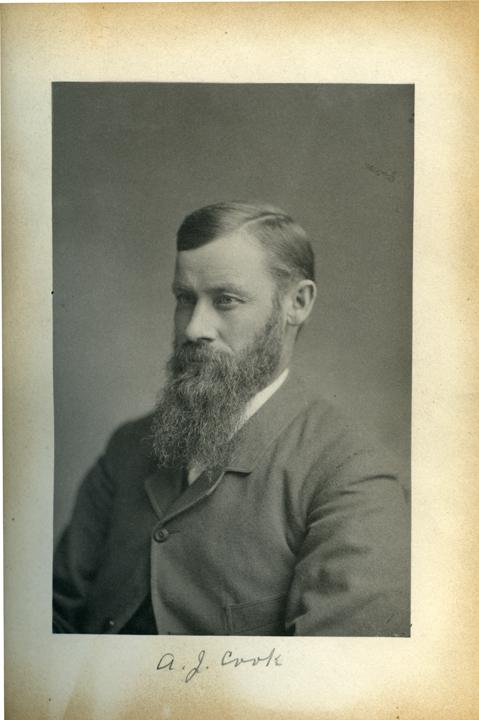 Albert J. Cook, 1886