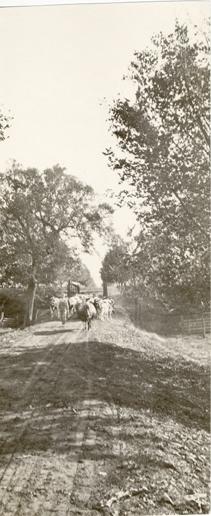 Cows Cross a Bridge