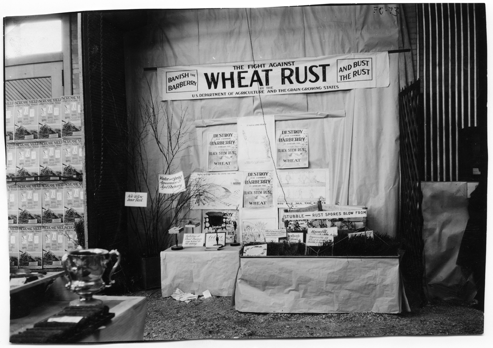 Exhibit about Wheat Rust during Farmers' Week