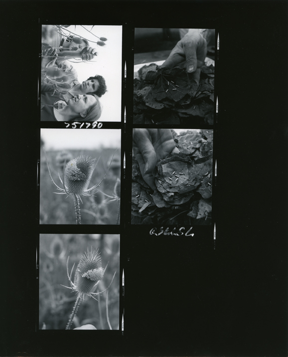 Contact print of five KBS images, 1975