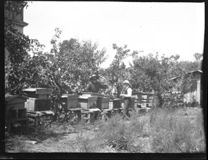 Beekeepers with hive boxes (Frank M. Benton papers), circa 1880s