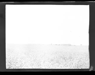 A field (Frank M. Benton papers), circa 1880s