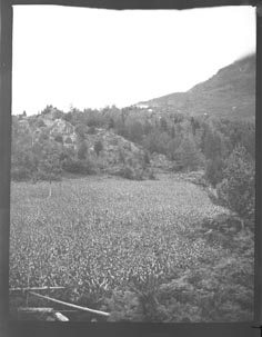 Field near on a mountain side (Frank M. Benton papers), circa 1880s
