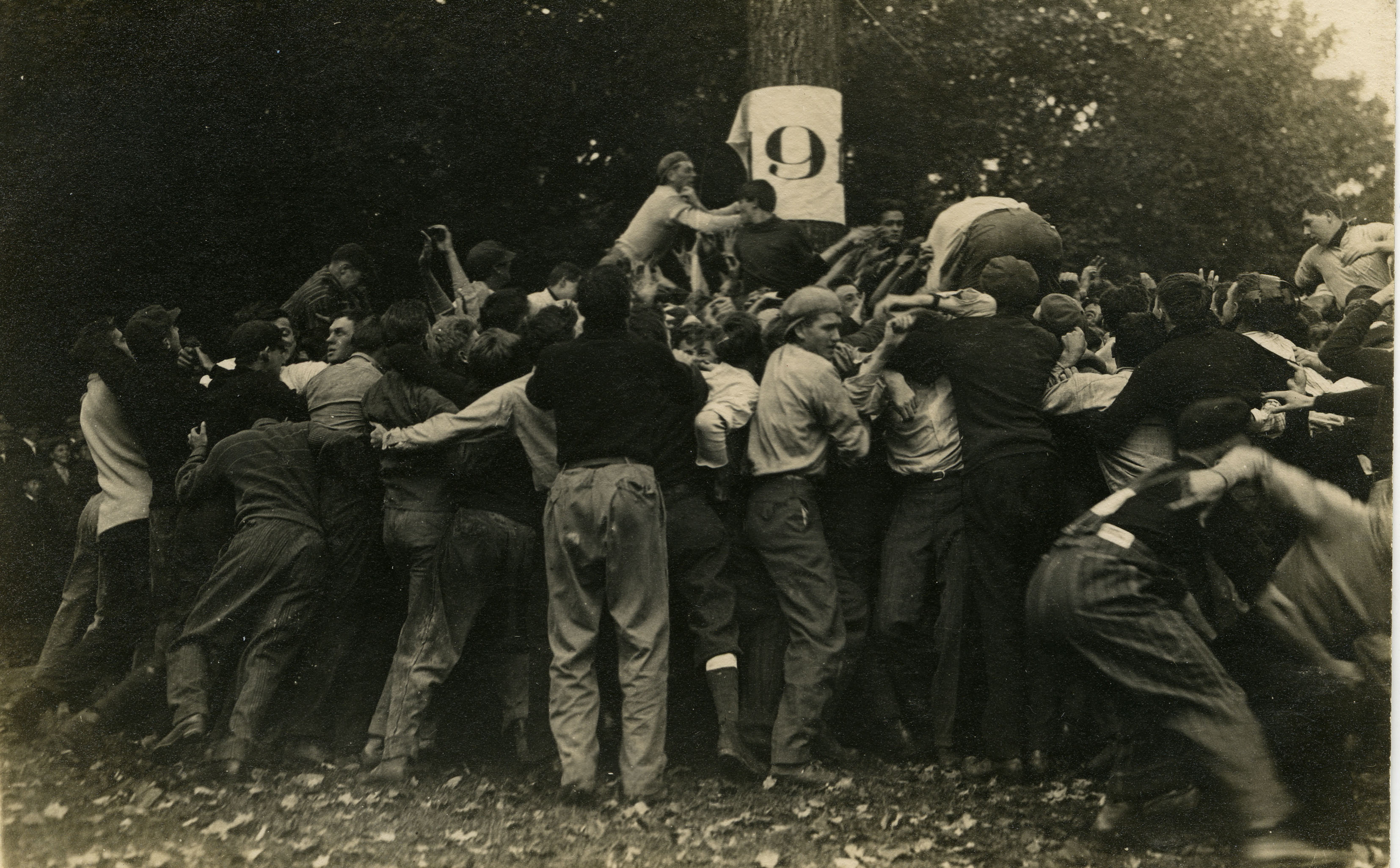 "Student tears a ""flag"" from a tree during Class Rush, circa 1916"