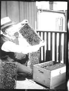 Man holding a bee hive (Frank M. Benton papers), circa 1880s