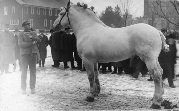 Horse and Handler, undated