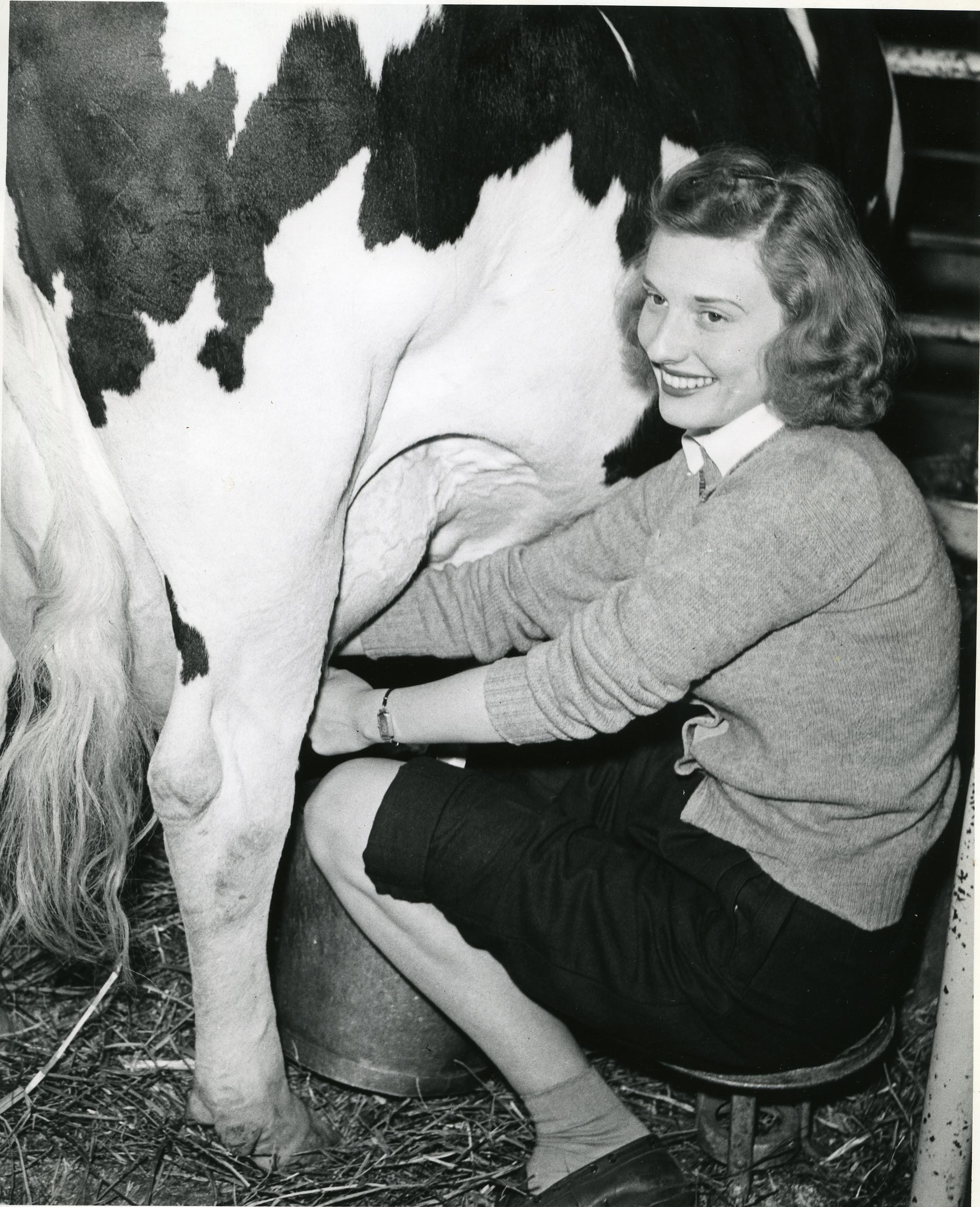 Woman milking cow, circa 1943