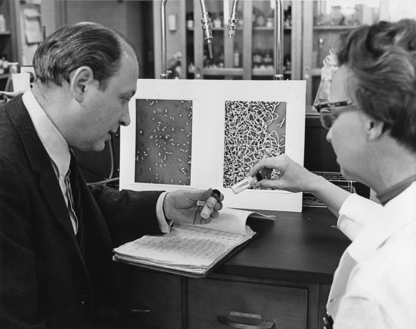 Barnett Rosenberg and Loretta Van Camp with photographs of normal bacteria and bacteria that have been treated with platinum.