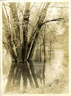 The Red Cedar flooding the banks, taken by Onn Mann Liang, circa 1925