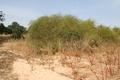 Fields outside Ndiassane