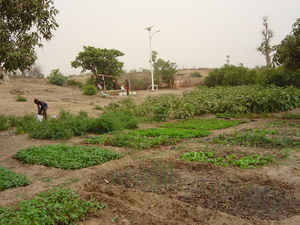 Photo of Bécaye Coulibaly's field in Ndiassane 1